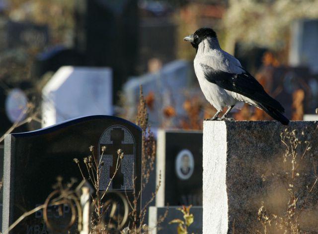 Ворона на кладовищі